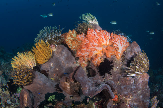 BMU400169U © Stocktrek Images, Inc. Crinoids and soft coral reef scene in Komodo National Park, Indonesia.