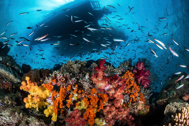 BRP400075U © Stocktrek Images, Inc. Two boats above a coral reef teeming with fish, Raja Ampat, Indonesia.