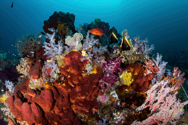 BRP400077U © Stocktrek Images, Inc. A reef of sponges among soft corals and fish, Raja Ampat, Indonesia.