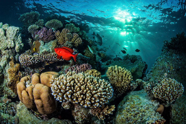 BRP400259U © Stocktrek Images, Inc. A coral reef under dappled light in the Red Sea, Egypt.