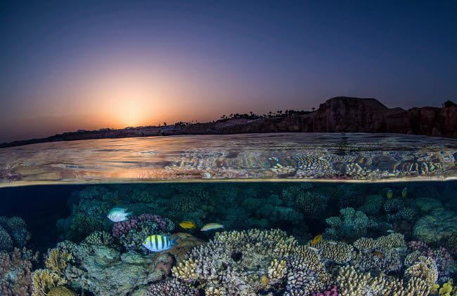 BRP400266U © Stocktrek Images, Inc. An over under of the sunset in the Red Sea and a coral reef.