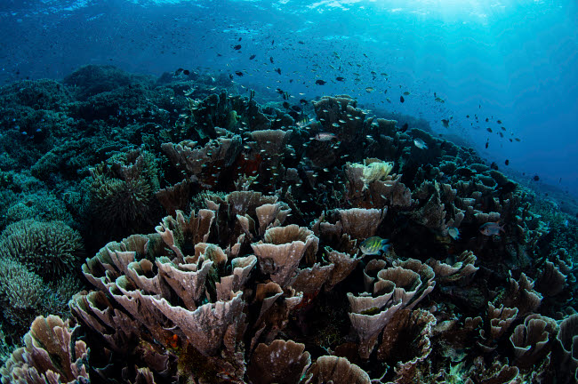 ETH401074U © Stocktrek Images, Inc. A beautiful and fragile coral reef grows in Komodo National Park, Indonesia.