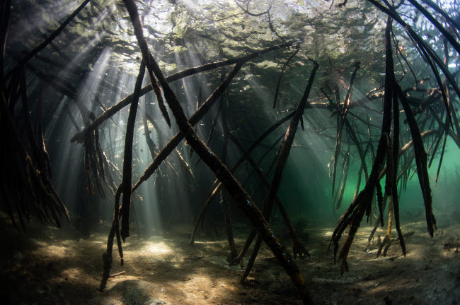 ETH401079U © Stocktrek Images, Inc. Bright sunbeams filter into the shadows of a mangrove forest in Komodo National Park.