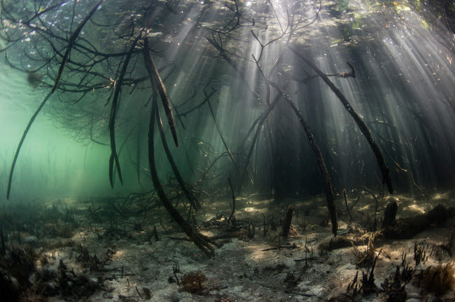 ETH401086U © Stocktrek Images, Inc. Bright sunbeams filter into the shadows of a mangrove forest in Komodo National Park.