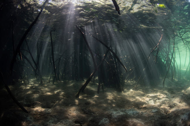 ETH401087U © Stocktrek Images, Inc. Bright sunbeams filter into the shadows of a mangrove forest in Komodo National Park.