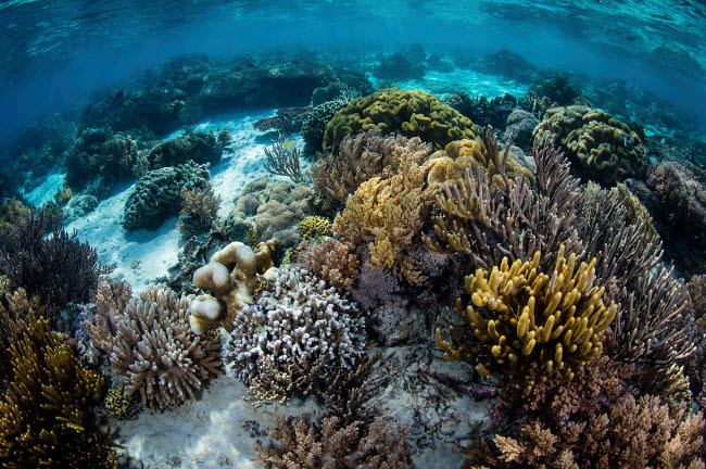 ETH401090U © Stocktrek Images, Inc. A beautiful reef full of soft corals grows in Komodo National Park, Indonesia.