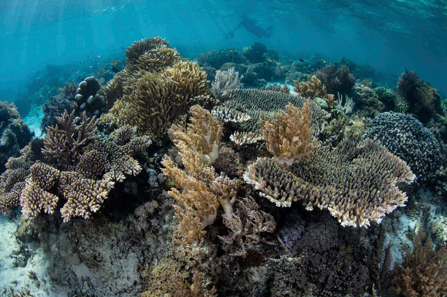 ETH401091U © Stocktrek Images, Inc. A beautiful and fragile coral reef grows in Komodo National Park, Indonesia.
