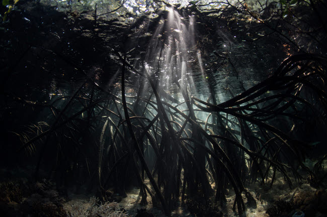 ETH401104U © Stocktrek Images, Inc. Bright sunbeams filter into the shadows of a mangrove forest in Komodo National Park.