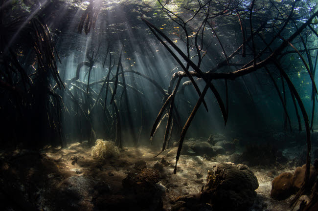 ETH401108U © Stocktrek Images, Inc. Bright sunbeams filter into the shadows of a mangrove forest in Komodo National Park.
