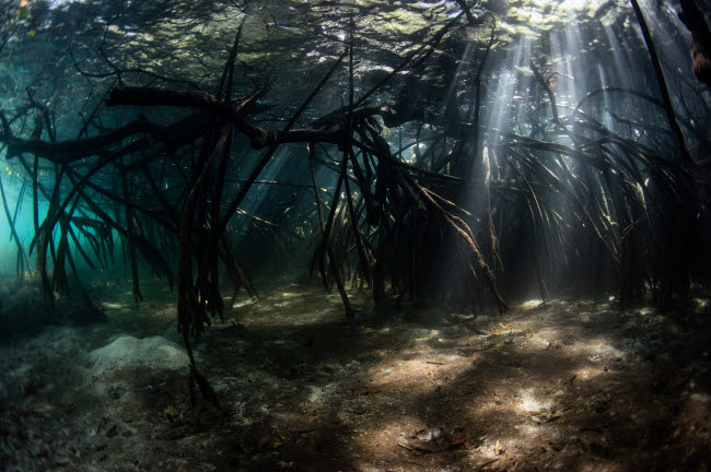 ETH401109U © Stocktrek Images, Inc. Bright sunbeams filter into the shadows of a mangrove forest in Komodo National Park.