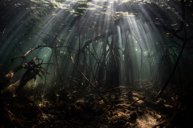 ETH401110U © Stocktrek Images, Inc. Bright sunbeams filter into the shadows of a mangrove forest in Komodo National Park.