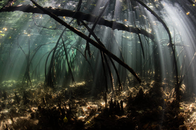 ETH401111U © Stocktrek Images, Inc. Bright sunbeams filter into the shadows of a mangrove forest in Komodo National Park.