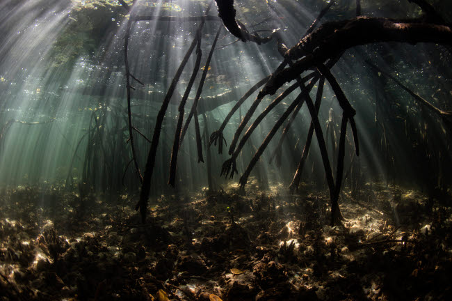 ETH401114U © Stocktrek Images, Inc. Bright sunbeams filter into the shadows of a mangrove forest in Komodo National Park.