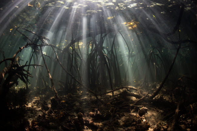ETH401115U © Stocktrek Images, Inc. Bright sunbeams filter into the shadows of a mangrove forest in Komodo National Park.