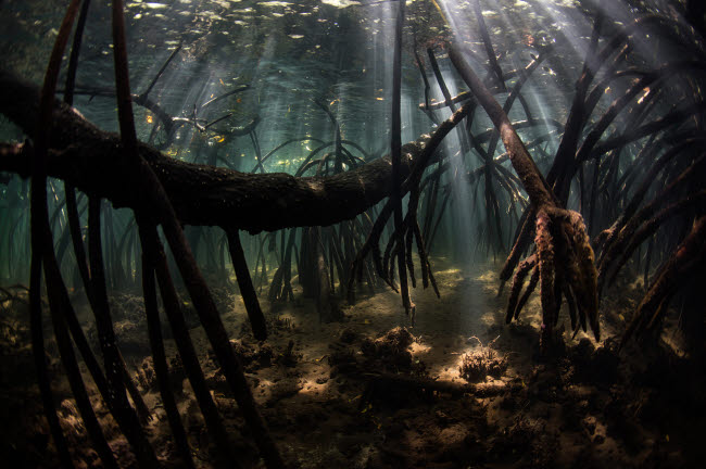 ETH401117U © Stocktrek Images, Inc. Bright sunbeams filter into the shadows of a mangrove forest in Komodo National Park.