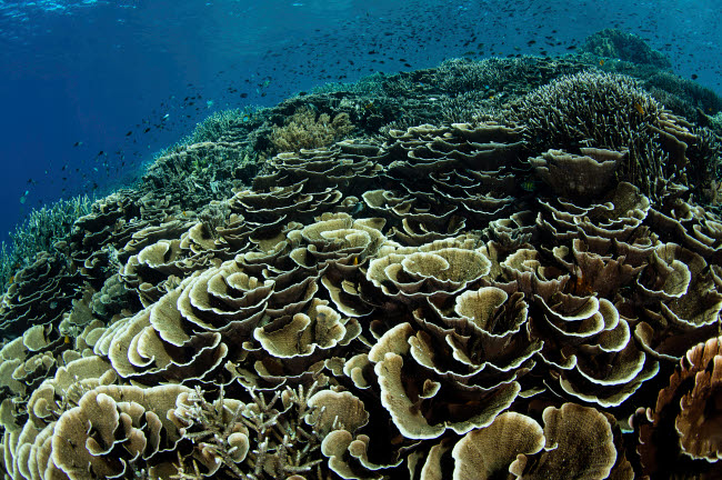ETH401119U © Stocktrek Images, Inc. A beautiful and fragile coral reef grows in Komodo National Park, Indonesia.