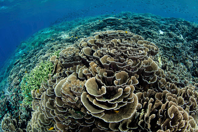 ETH401120U © Stocktrek Images, Inc. A beautiful and fragile coral reef grows in Komodo National Park, Indonesia.