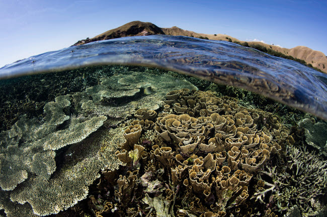 ETH401121U © Stocktrek Images, Inc. A beautiful and fragile coral reef grows in Komodo National Park, Indonesia.