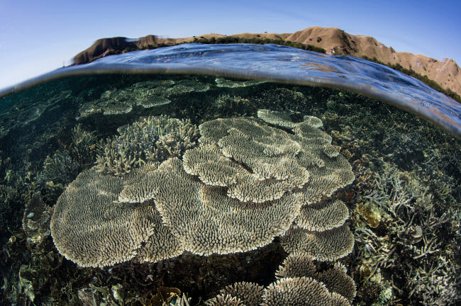 ETH401123U © Stocktrek Images, Inc. A beautiful and fragile coral reef grows in Komodo National Park, Indonesia.