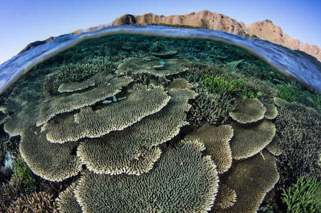 ETH401127U © Stocktrek Images, Inc. A beautiful and fragile coral reef grows in Komodo National Park, Indonesia.