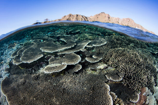 ETH401128U © Stocktrek Images, Inc. A beautiful and fragile coral reef grows in Komodo National Park, Indonesia.