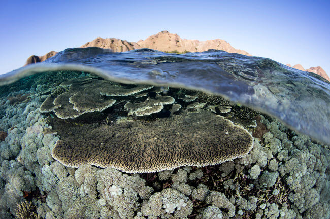 ETH401129U © Stocktrek Images, Inc. A beautiful and fragile coral reef grows in Komodo National Park, Indonesia.