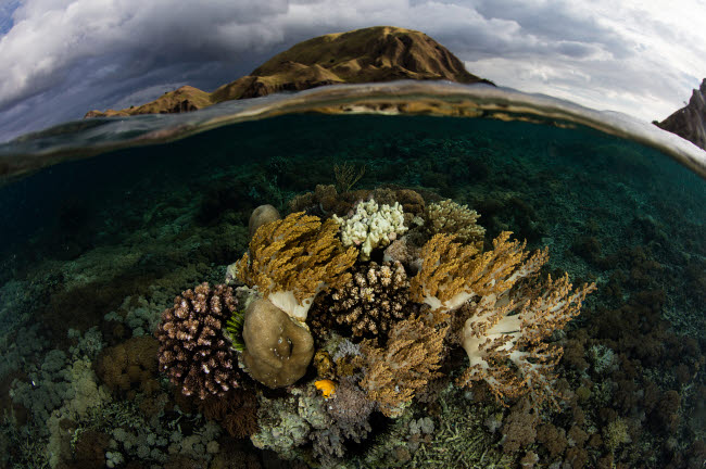 ETH401184U © Stocktrek Images, Inc. A beautiful set of corals grows in shallow water in Komodo National Park, Indonesia.