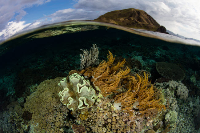 ETH401192U © Stocktrek Images, Inc. A beautiful set of corals grows in shallow water in Komodo National Park, Indonesia.