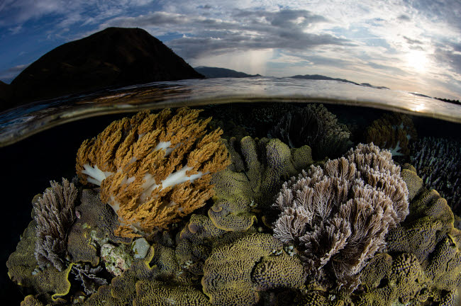 ETH401196U © Stocktrek Images, Inc. A beautiful set of corals grows in shallow water in Komodo National Park, Indonesia.