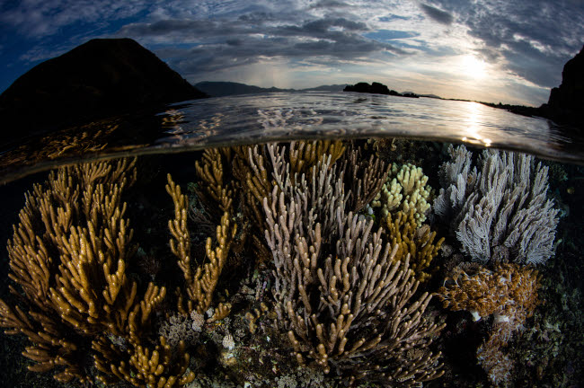 ETH401200U © Stocktrek Images, Inc. A beautiful set of corals grows in shallow water in Komodo National Park, Indonesia.