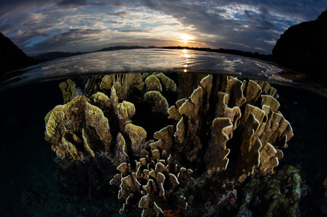 ETH401204U © Stocktrek Images, Inc. A beautiful set of corals grows in shallow water in Komodo National Park, Indonesia.