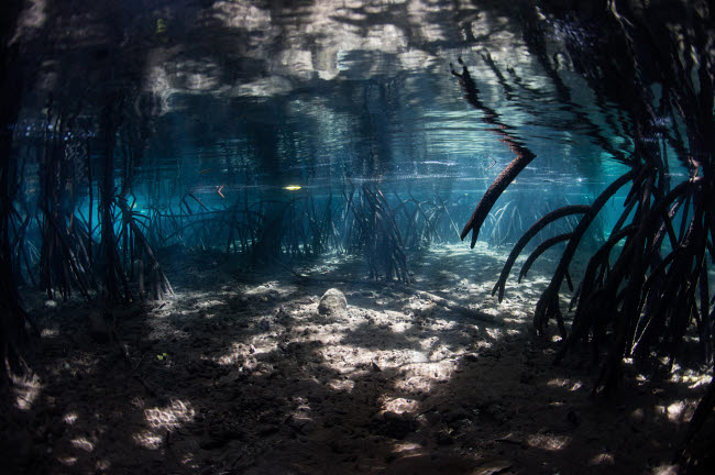ETH401384U © Stocktrek Images, Inc. Bright sunlight filters through a mangrove forest in Raja Ampat, Indonesia.