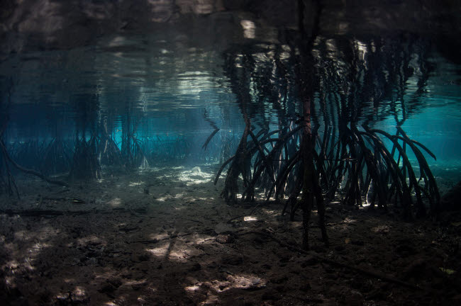 ETH401385U © Stocktrek Images, Inc. Bright sunlight filters through a mangrove forest in Raja Ampat, Indonesia.
