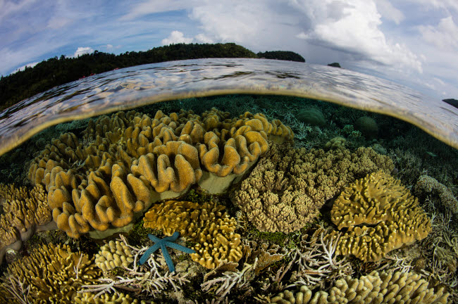 ETH401434U © Stocktrek Images, Inc. A beautiful coral reef grows near an island in Raja Ampat, Indonesia.