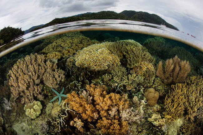 ETH401443U © Stocktrek Images, Inc. A beautiful coral reef grows near an island in Raja Ampat, Indonesia.