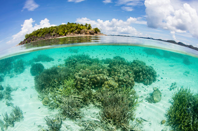 ETH401455U © Stocktrek Images, Inc. A beautiful coral reef grows near an island in Raja Ampat, Indonesia.
