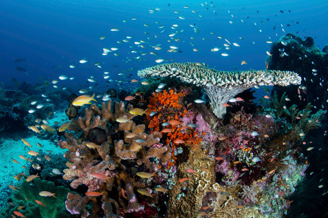 ETH401480U © Stocktrek Images, Inc. A beautiful coral reef grows near an island in the Banda Sea, Indonesia.