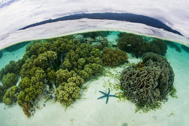 ETH401523U © Stocktrek Images, Inc. A beautiful and healthy coral reef grows in Raja Ampat, Indonesia.