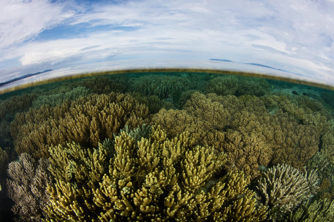 ETH401524U © Stocktrek Images, Inc. A beautiful and healthy coral reef grows in Raja Ampat, Indonesia.