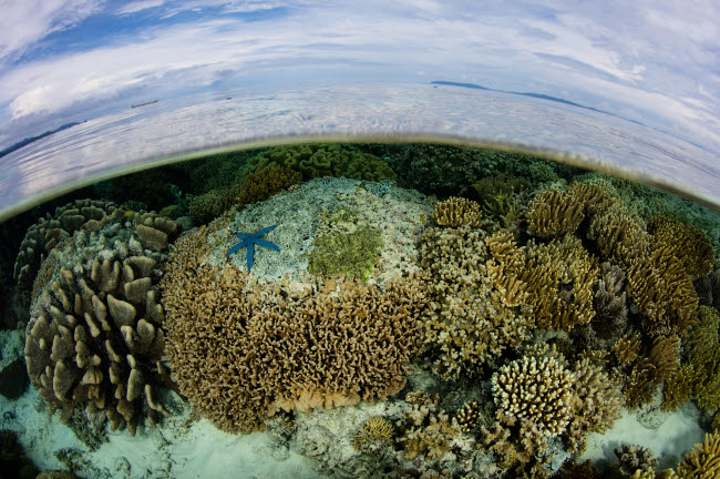 ETH401525U © Stocktrek Images, Inc. A beautiful and healthy coral reef grows in Raja Ampat, Indonesia.