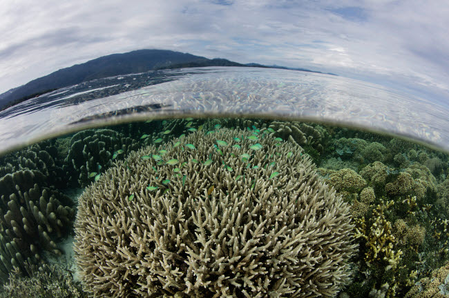 ETH401526U © Stocktrek Images, Inc. A beautiful and healthy coral reef grows in Raja Ampat, Indonesia.