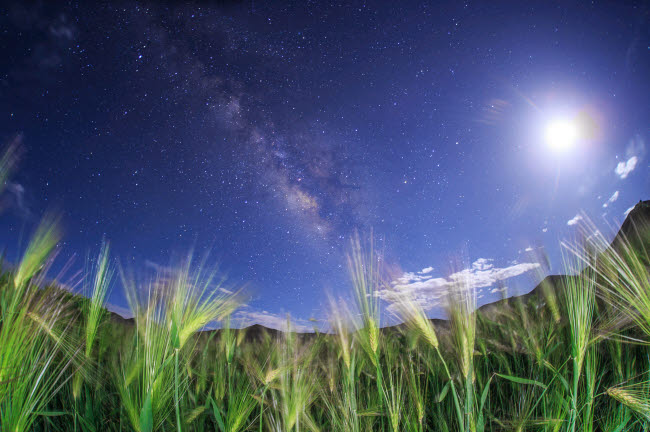 JFD200033S © Stocktrek Images, Inc. The Milky Way shines brightly over a hulless barley field in Tibet, China.