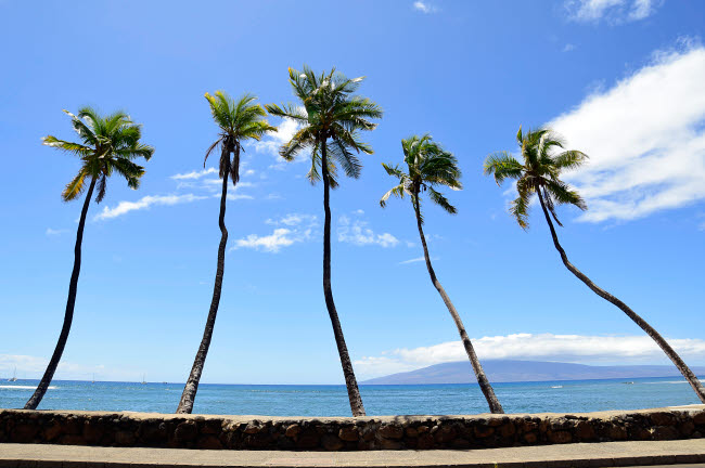 RYN100005T © Stocktrek Images, Inc. Palm trees jut out over the water Maui, Hawaii.