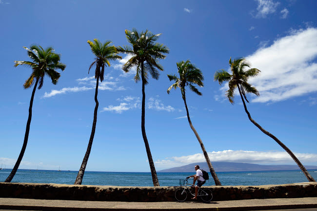 RYN100006T © Stocktrek Images, Inc. Man riding bicycle beside palm trees, Maui, Hawaii.