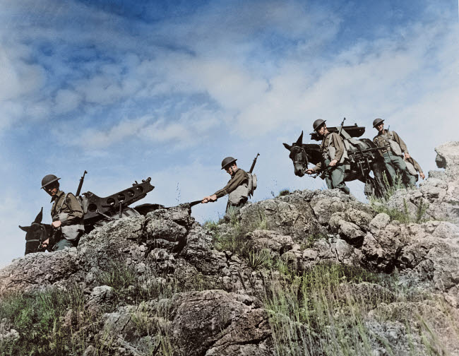 STK501289A © Stocktrek Images, Inc. Artillerymen use Army mules to carry their equipment through rough terrain, circa 1942.