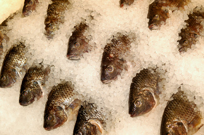 VWP400451U © Stocktrek Images, Inc. Tilapia on ice at a seafood market.
