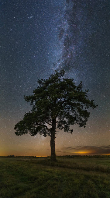YZV200006S © Stocktrek Images, Inc. Lonely tree in a field at night under the Milky Way in Vyazma, Russia.