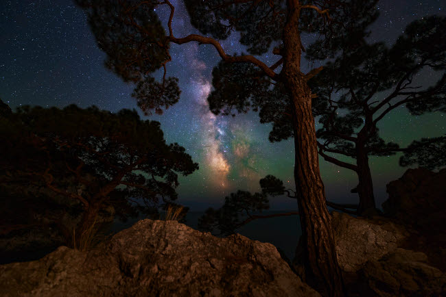 YZV200026S © Stocktrek Images, Inc. The Milky Way shining through the trees on the coast of the Black Sea.